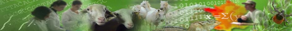 Unité Mixte de Recherche d'Epidémiologie des maladies animales et zoonotiques (UMR EPI-A)