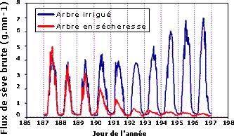 Evolution du flux de sève brute sur 10 jours