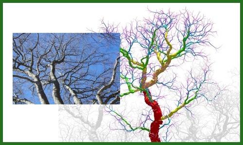 arbres réels et virtuels