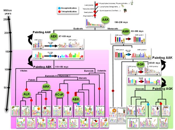 plant genome evolution