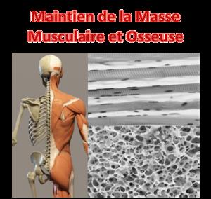 Theme Os Muscle FR