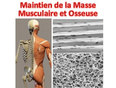 Maintien de la masse musculaire et osseuse